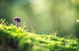 Os misteriosos cogumelos silvestres