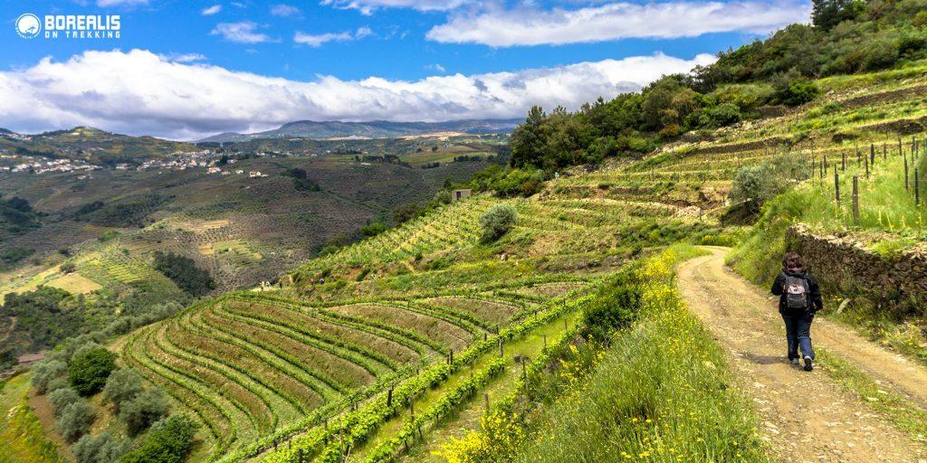 vinhedos tradicionais corgo