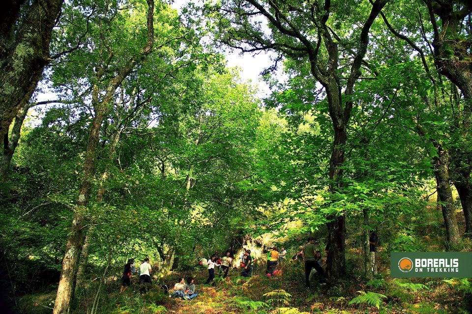 bosque serra oural