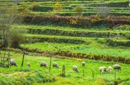 Trilho pelas encostas e chãs da Serra d'Arga, do Cerquido à Senhora do Minho