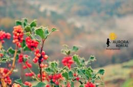 Boas práticas ambientais, turismo de natureza