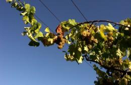 Rota do Vinho Verde